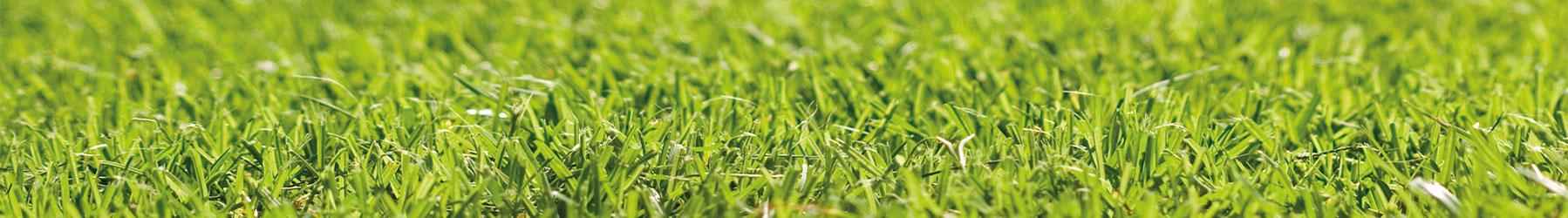 Rasenpflege Tipps - Ihr Weg zum